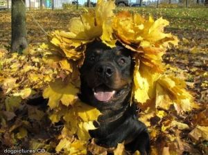 dog crowned by leaves